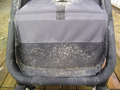 Mouldy Bugaboo Cameleon Before