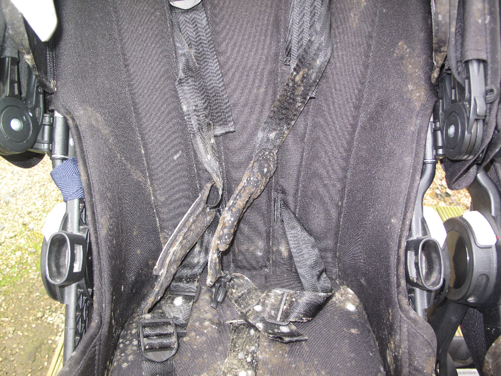 Mouldy Bugaboo harness straps before